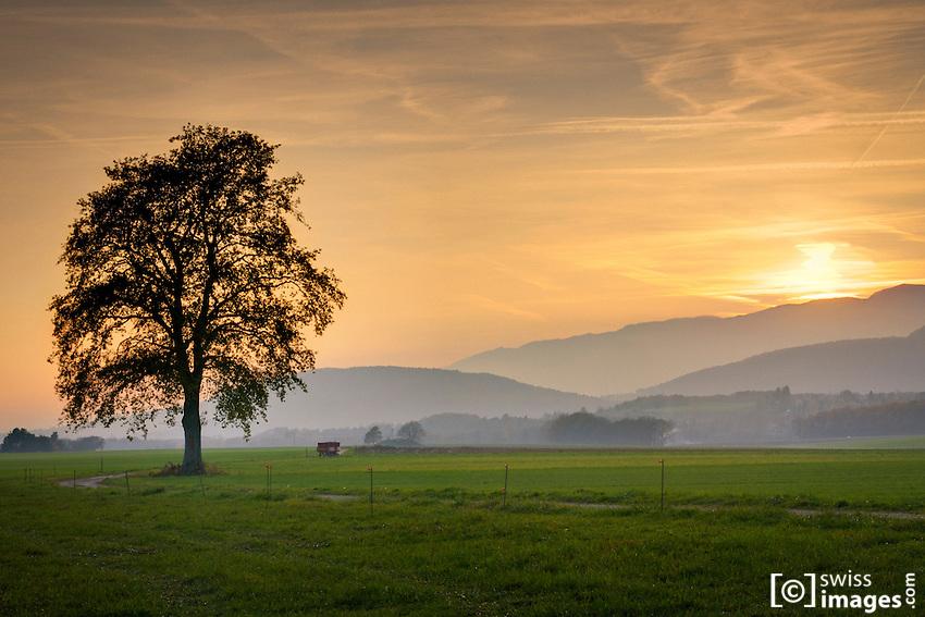 Countryside view near Chéserex/Switzerland