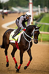 LOUISVILLE, KY - MAY 04: Majesto gallop in preparation for the Kentucky Derby at Churchill Downs on May 04, 2016 in Louisville, Kentucky.(Photo by Alex Evers/Eclipse Sportswire/Getty Images)