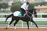 Track Work: February 19 2021: CHUWA WIZARD (JPN) Track work from King Abddulaziz Racetrack, Riyadh, Saudi Arabia. Shamela Hanley/Eclipse Sportswire/CSM FEBRUARY 19 2021: The Saudi Cup Preparations.
