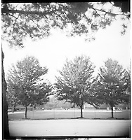 Three trees. From the Spartus Full Vue Collection
