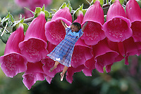 Six year old flower child swinging amongst Foxglove flowers.