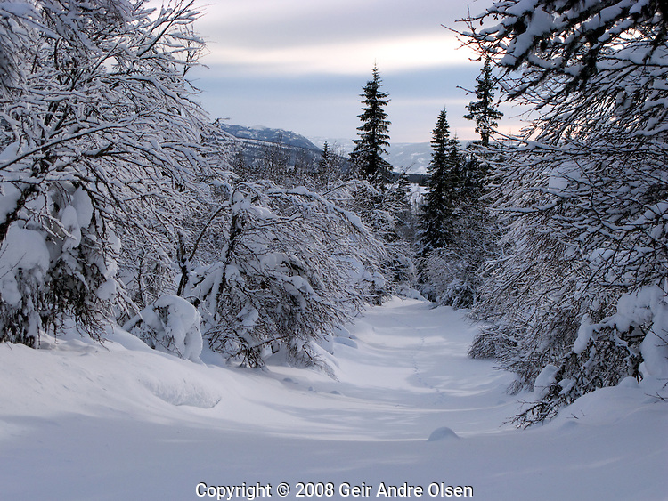 Fresh ski trails at the Norwegian mountains one nice winters day