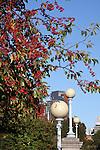 Red berries on tree branches. Boston Public Garden, Boston, MA