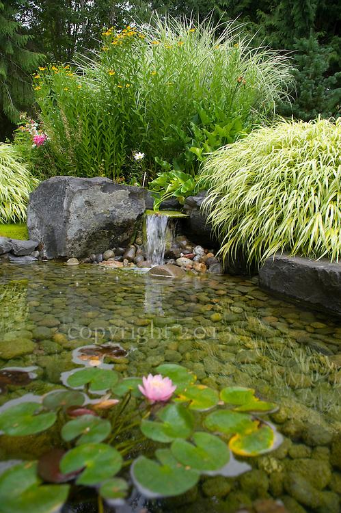 Backyard Pond with Lily Pads