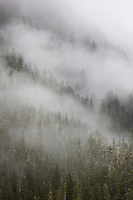Mist and fog over the Chugach National Forest, College Fjord, Prince William Sound, southcentral, Alaska.