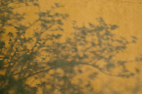Shadows on the wall from tree branches.