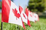USA, Illinois, Metamora, Row of Canadian flags on cemetery