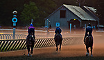 SARATOGA SPRINGS, NY - AUGUST 26: Horses exercise on the Oklahoma Training Track just after sunrise on the morning of Travers Stakes Day at Saratoga Race Course on August 26, 2017 in Saratoga Springs, New York. (Photo by Scott Serio/Eclipse Sportswire/Getty Images)