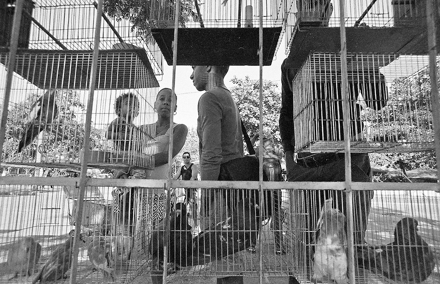 Birds for sale at a market in Santa Clara, Cuba. MARK TAYLOR GALLERY