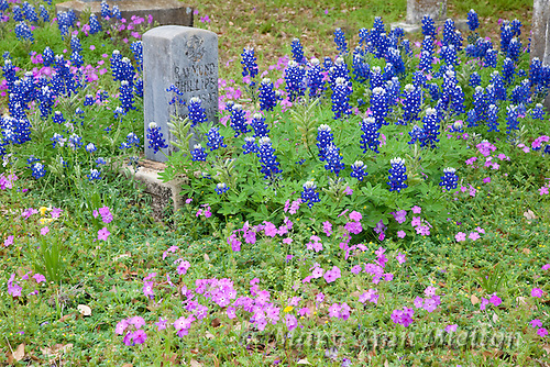 An image Smithwick Cemetery Texas during wildflower season