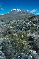 Kibo Summit, Mount Kilimanjaro, Tanzania, Africa