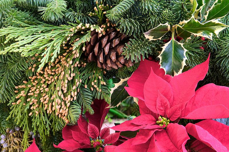 Pointsettia and Christmas wreath.