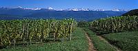 Europe/France/Rhone-Alpes/73/Savoie/Apremont : AOC Vins de Savoie, le vignoble