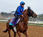 DEL MAR, CA - OCTOBER 30: Masar, owned by Godolphin Stable Lessee and trained by Charlie Appleby, exercises in preparation for Breeders' Cup Juvenile Turf at Del Mar Thoroughbred Club on {mothname} 30, 2017 in Del Mar, California. (Photo by Scott Serio/Eclipse Sportswire/Breeders Cup)