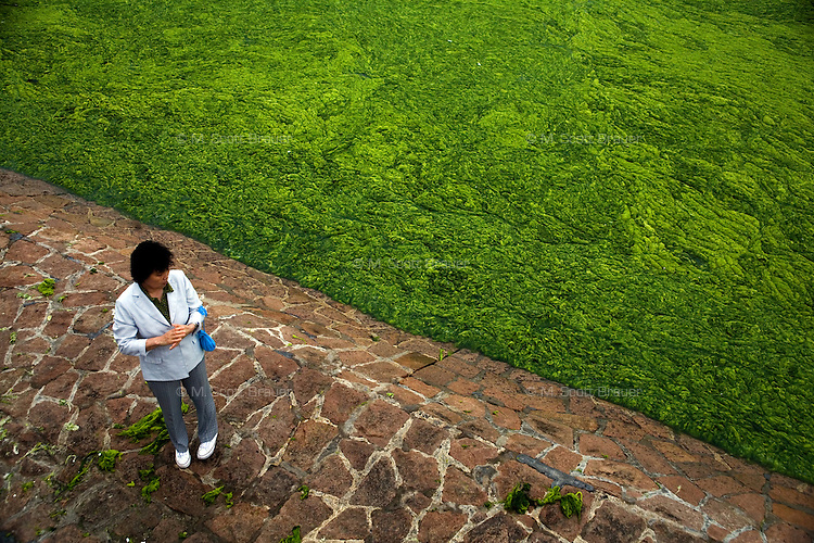 A woman stands on the banks of Tuandao Bay in Qingdao, Shandong, China, during an algal bloom off the coast.  ..Qingdao is the host of the sailing events for the 2008 Summer Olympics. Algae blooms like this have become common in inland lakes in China, often caused by high pollution in bodies of water.  The city is asking for help and forcing residents to take part in the cleanup effort before the Olympic events.