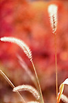 HDR, Grass, Autumn, Fall, Seasons, Color, Wind, Soft