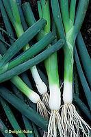 HS16-102x  Onion - bunching/scallion onions - Tokyo Long White Variety