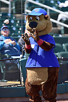 Cubbie, the mascot of the Iowa Cubs plays catch prior to the game between the  New Orleans Zephyrs and the Iowa Cubs at Principal Park on April 23, 2015 in Des Moines, Iowa.  The Zephyrs won 9-2.  (Dennis Hubbard/Four Seam Images)