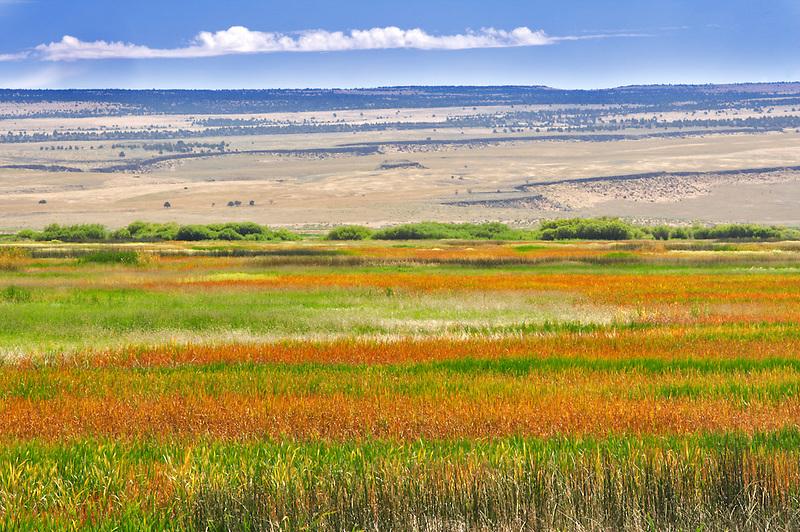 Multi colored grasses. Malheur National Wildlife Refuge. Oregon