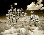 Fine Art Black & White Images