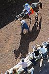 Nov. 03, 2012 - Arcadia, California, U.S - Scene from Day 2 at the Breeders' Cup  at Santa Anita Park in Arcadia, CA. (Credit Image: © Ryan Lasek/Eclipse/ZUMAPRESS.com)