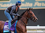 ARCADIA, CA - OCT 31: Oscar Performance, owned by American Racing, LLC and trained by Brian A. Lynch, exercises in preparation for the Breeders' Cup Juvenile Turf at Santa Anita Park on October 31, 2016 in Arcadia, California. (Photo by Douglas DeFelice/Eclipse Sportswire/Breeders Cup)