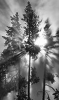 The sun shines through clouds of steam near a thermal area in Yellowstone.