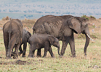 Elephant Family2  Kenya 2015