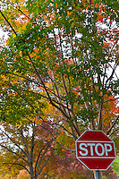 A parking lot sign seems to advise stopping and looking up at the changing colors.