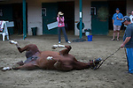 DEL MAR,CA-AUGUST 19: California Chrome is grounding at Del Mar Race Track on August 17,2016 in Del Mar,California (Photo by Kaz Ishida/Eclipse Sportswire/Getty Images)