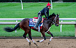 October 30, 2020: Dreamer'S Disease, trained by trainer Robertino Diodoro, exercises in preparation for the Breeders' Cup Juvenile at Keeneland Racetrack in Lexington, Kentucky on October 30, 2020. Scott Serio/Eclipse Sportswire/Breeders Cup/CSM