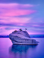 Bonsai tree on boulder with sunrise. Lake Tahoe, Nevada