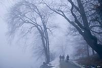 winter snow fog trees, Jamaica Pond, Boston, MA Jamaica Plain