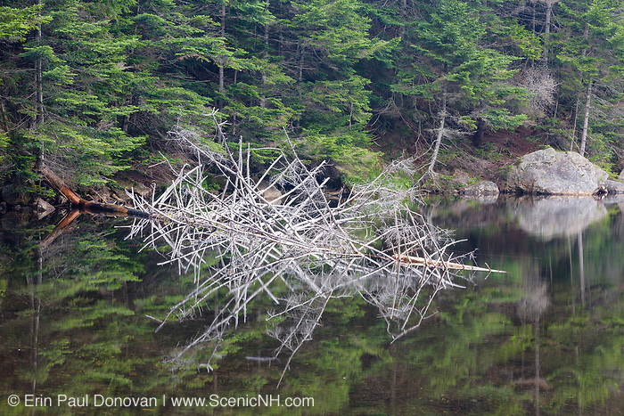 Greeley Ponds Scenic Area - Reflection in Upper Greeley Pond in the White Mountains, New Hampshire USA.