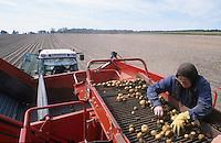 GERMANY potato harvest / DEUTSCHLAND Kartoffel Ernte mit Traktor und Grimme Roder in Mecklenburg-Vorpommern