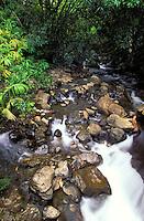 Gentle stream flows through the jungle and lush greenery of the Hamakua Coast on the Big Island of Hawaii.