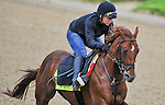 April 26, 2015: Far Right, trained by Ron Moquett exercises in preparation for the 141st Kentucky Derby at Churchill Downs in Louisville, Kentucky. Scott Serio/CSM
