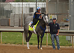 LOUISVILLE, KY - APRIL 19: Mohaymen (Tapit x Justwhistledixie, by Dixie Union) goes to the track to gallop with exercise rider Miguel Jaime, Churchill Downs, Louisville KY. Owner Shadwell Stable, trainer Kieran McLaughlin. (Photo by Mary M. Meek/Eclipse Sportswire/Getty Images)