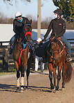 November 03, 2020: Come Dancing, trained by trainer Carlos Martin, exercises in preparation for the Breeders' Cup Filly & Mare Sprint at Keeneland Racetrack in Lexington, Kentucky on November 3, 2020.