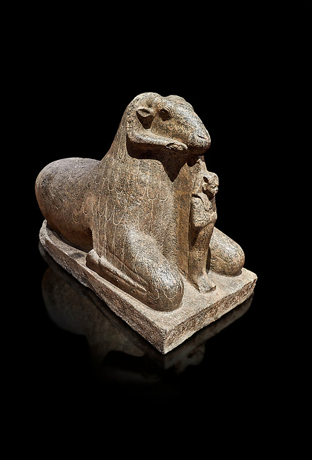 Ancient Egyptian statue of a Ram protecting King Amenhotep III, granite, New Kingdom, early 18th Dynasty (1390-1353), Karnak, Temple of Mut. Egyptian Museum, Turin. Black background<br /> <br /> a figure of Amenhotep III as Osiris stands between the legs of the Ram. there is a hole in the top of the rams head for the insertion of a solar disk associating it to the god Amon, whose animal form is the ram, and with the sun god Re. The statue may have stood in the Soleb of Nubia. Drovetti Collection. C 836