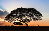 A woman walks her dog at sunset in the park on the North Shore of O'ahu.