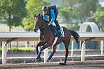 SHA TIN,HONG KONG-DECEMBER 08 : Tiberian,trained by Alain Couetil,exercises in preparation for the Hong Kong Vase at Sha Tin Racecourse on December 8,2017 in Sha Tin,New Territories,Hong Kong (Photo by Kaz Ishida/Eclipse Sportswire/Getty Images)