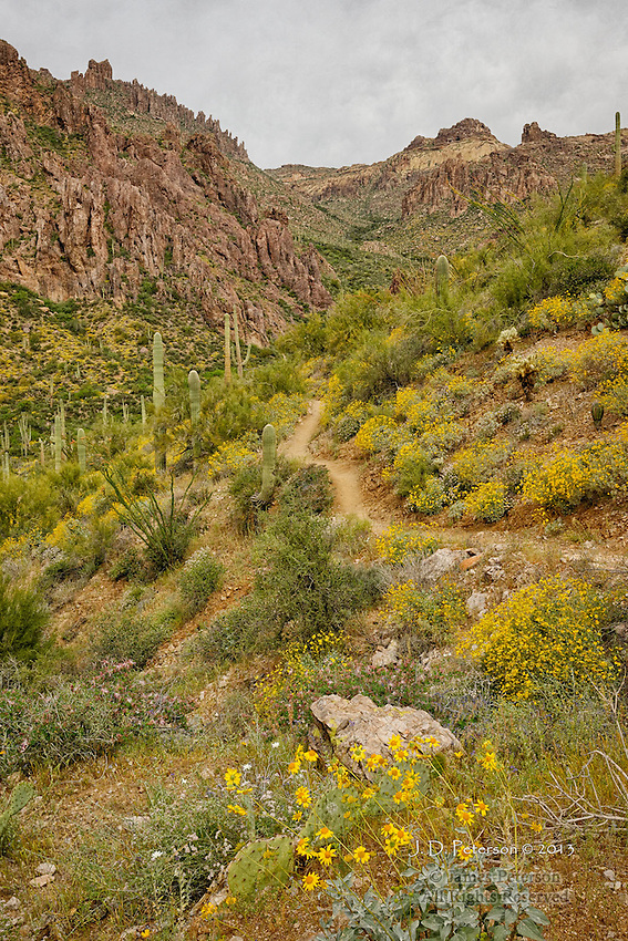 Peralta Canyon and Dutchman Trail, Superstition Mountains, Arizona