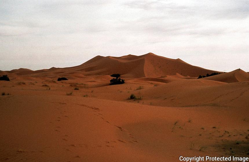 World Civilization:  Morocco--Erg, area of shifting sands in Sahara Desert.  Photo '91.