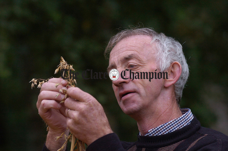 Kilmihil man Pat Considine examines some of the crop during the Bunratty Harvest fair. Photograph by John Kelly.
