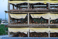 NEPAL, Tandi, poultry farm with 3000 chicken in multi-storey house, was built as supermarket, but since 2013 it is used for chicken breeding for egg production and broiler / Huehnerfarm in einem Hochhaus