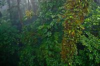 Monteverde Cloud Forest Biological Reserve, Costa Rica.