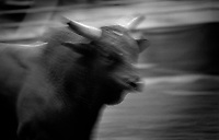 Black & white image of a rodeo - Bull looks as if he might charge. United States Rodeo.