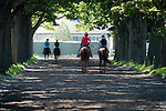 JUNE 7, 2016: Exaggerator, ridden by Kent Desormeaux, walking back to the barn, after morning workouts, at Belmont Park on June 7, 2016 in Elmont, New York (Photo by Douglas DeFelice/Eclipse Sportswire/Getty Images)