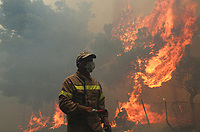 Forest fire in the area of Kineta, near Athens, Greece. 23 July 2018